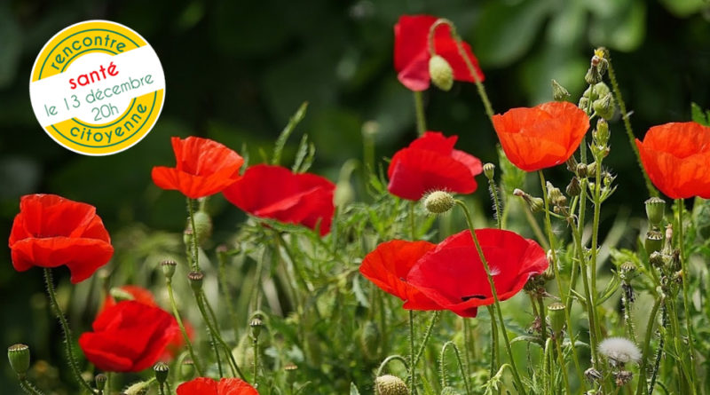 coquelicots pesticides