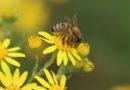 Des milliards d'insectes à Saint-Étienne de Montluc